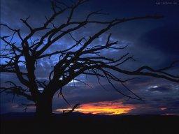 1165_Escocia-noche.jpg